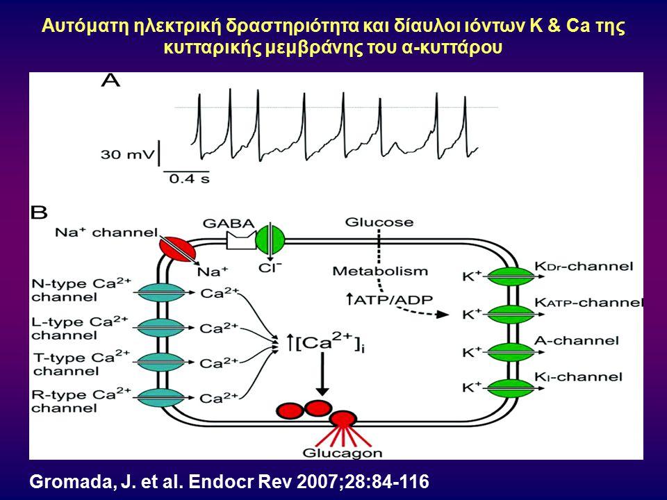Gromada, J. et al. Endocr Rev 2007;28:84-116 Αυτόματη ηλεκτρική δραστηριότητα και δίαυλοι ιόντων K & Ca της κυτταρικής μεμβράνης του α-κυττάρου