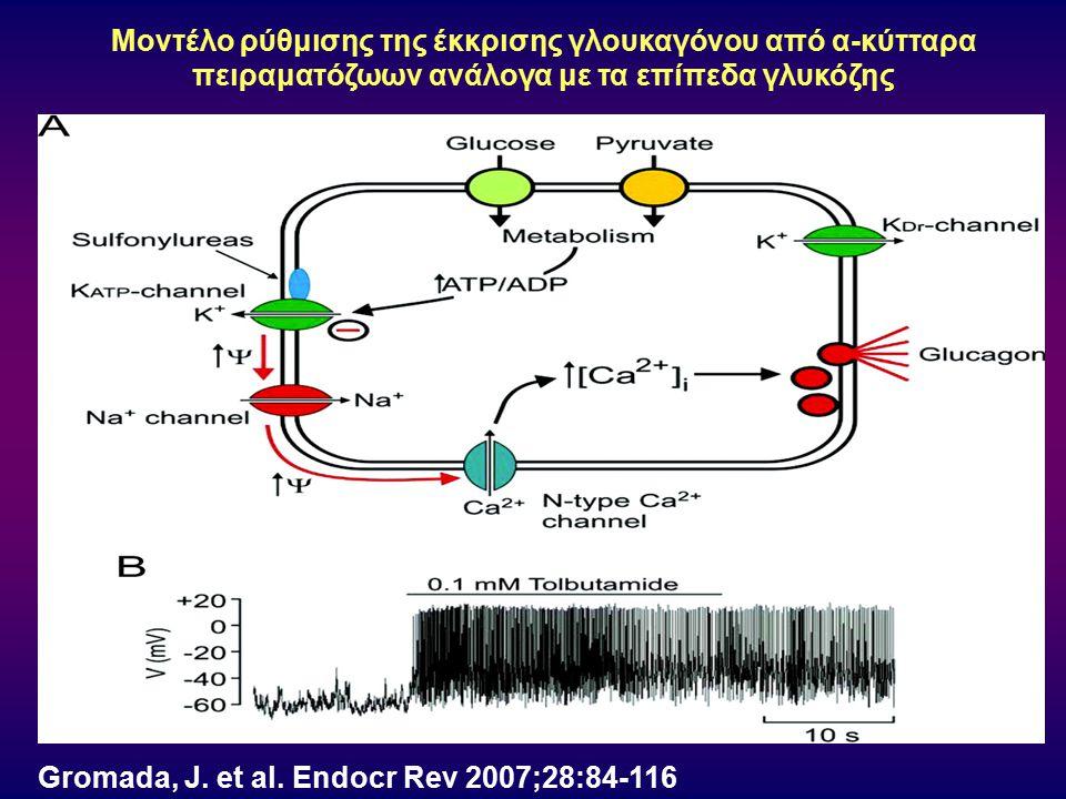 Gromada, J. et al. Endocr Rev 2007;28:84-116 Μοντέλο ρύθμισης της έκκρισης γλουκαγόνου από α-κύτταρα πειραματόζωων ανάλογα με τα επίπεδα γλυκόζης
