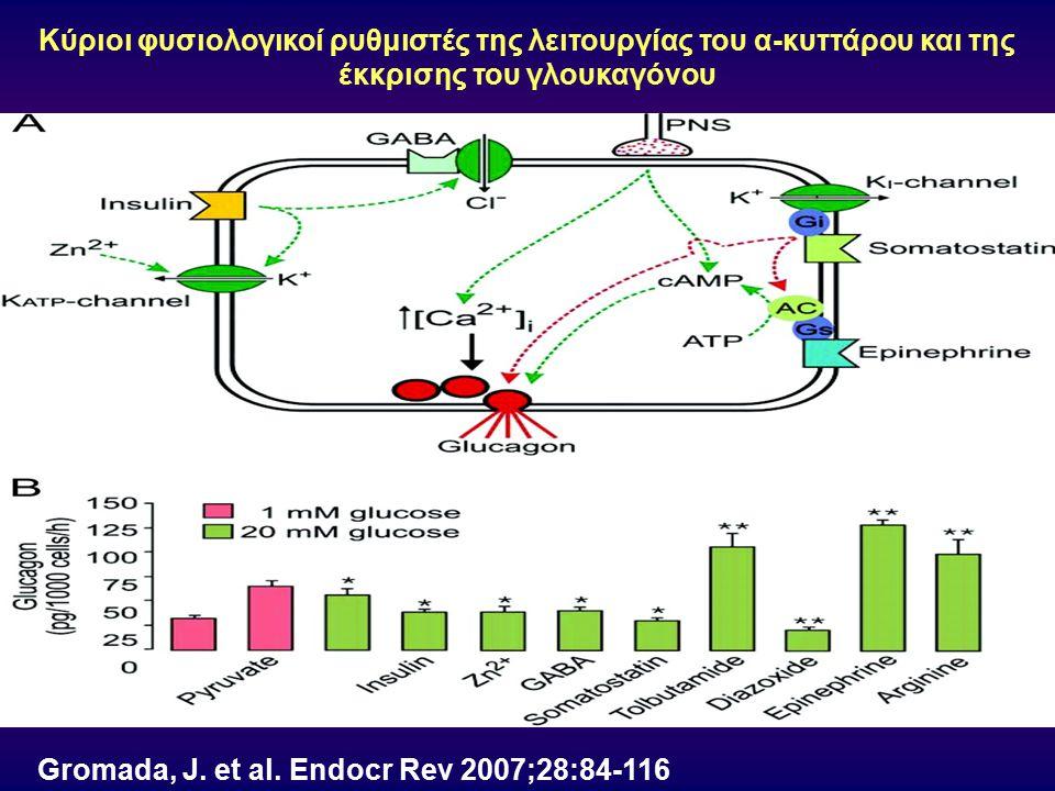 Gromada, J. et al. Endocr Rev 2007;28:84-116 Κύριοι φυσιολογικοί ρυθμιστές της λειτουργίας του α-κυττάρου και της έκκρισης του γλουκαγόνου