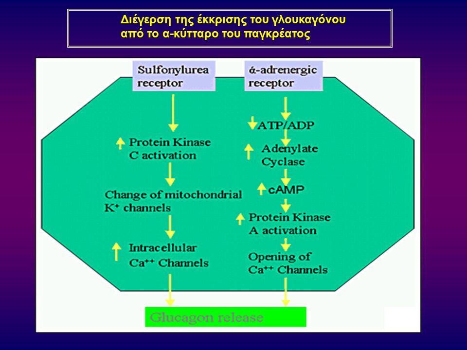 Διέγερση της έκκρισης του γλουκαγόνου από το α-κύτταρο του παγκρέατος