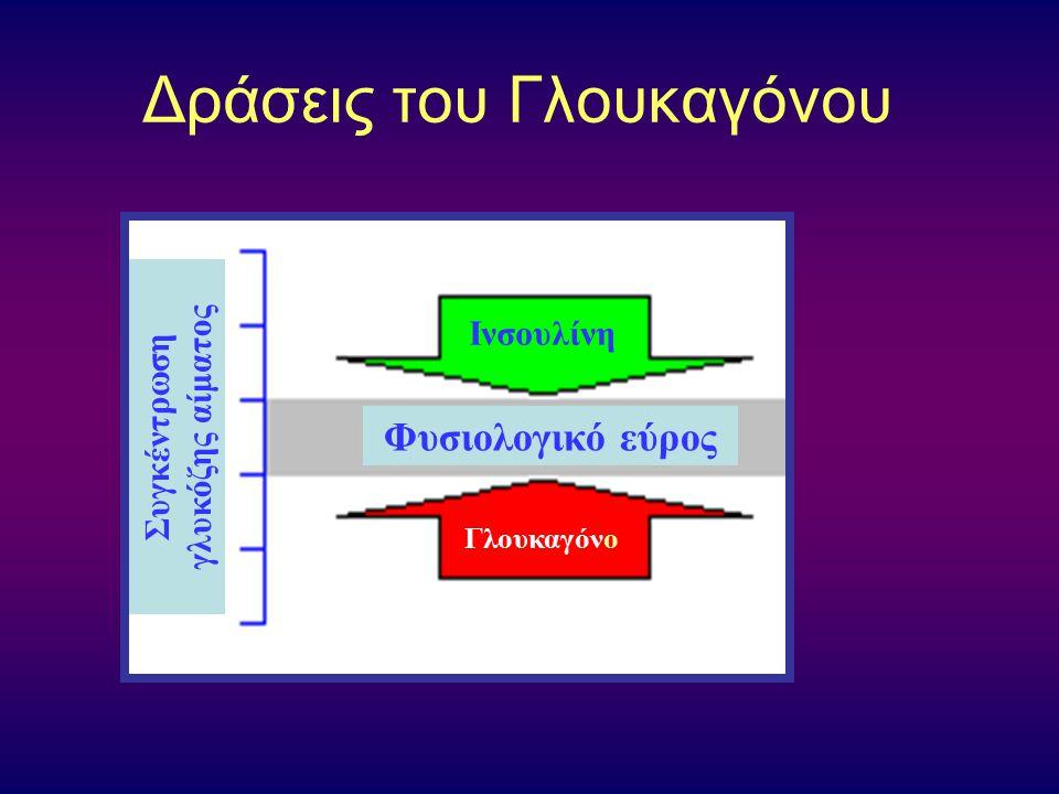 Δράσεις του Γλoυκαγόνoυ Συγκέντρωση γλυκόζης αίματος Φυσιολογικό εύρος Ινσουλίνη Γλουκαγόνο