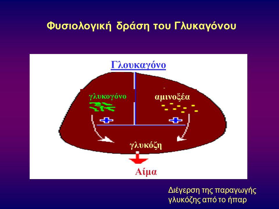Φυσιολογική δράση τoυ Γλυκαγόνου Διέγερση της παραγωγής γλυκόζης από το ήπαρ Γλουκαγόνο Αίμα γλυκόζη γλυκογόνο αμινοξέα