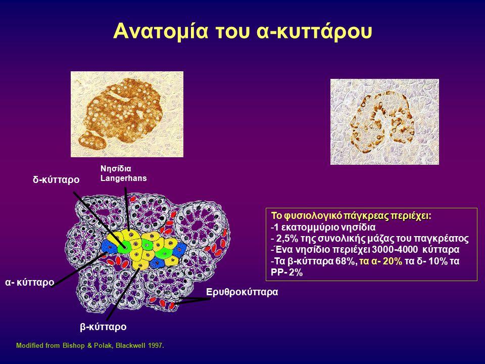 Ανατομία του α-κυττάρου Modified from Bishop & Polak, Blackwell 1997. δ-κύτταρο Νησίδια Langerhans Ερυθροκύτταρα β-κύτταρο α- κύτταρο πάγκρεας περιέχε