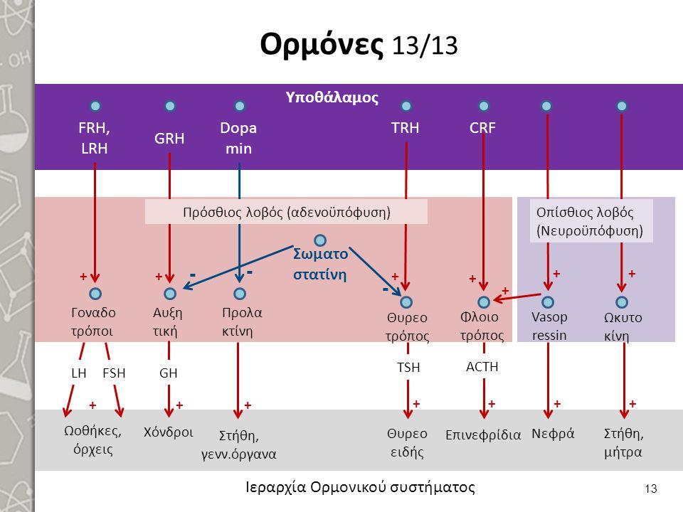 Ορμόνες 13/13 13 Ιεραρχία Ορμονικού συστήματος FRH, LRH GRH Dopa min TRHCRF ++ Γοναδο τρόποι Αυξη τική Προλα κτίνη LHFSH ++ + Υποθάλαμος Ωοθήκες, όρχε