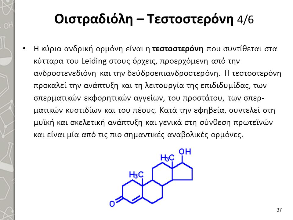 Οιστραδιόλη – Τεστοστερόνη 4/6 Η κύρια ανδρική ορμόνη είναι η τεστοστερόνη που συντίθεται στα κύτταρα του Leiding στους όρχεις, προερχόμενη από την αν
