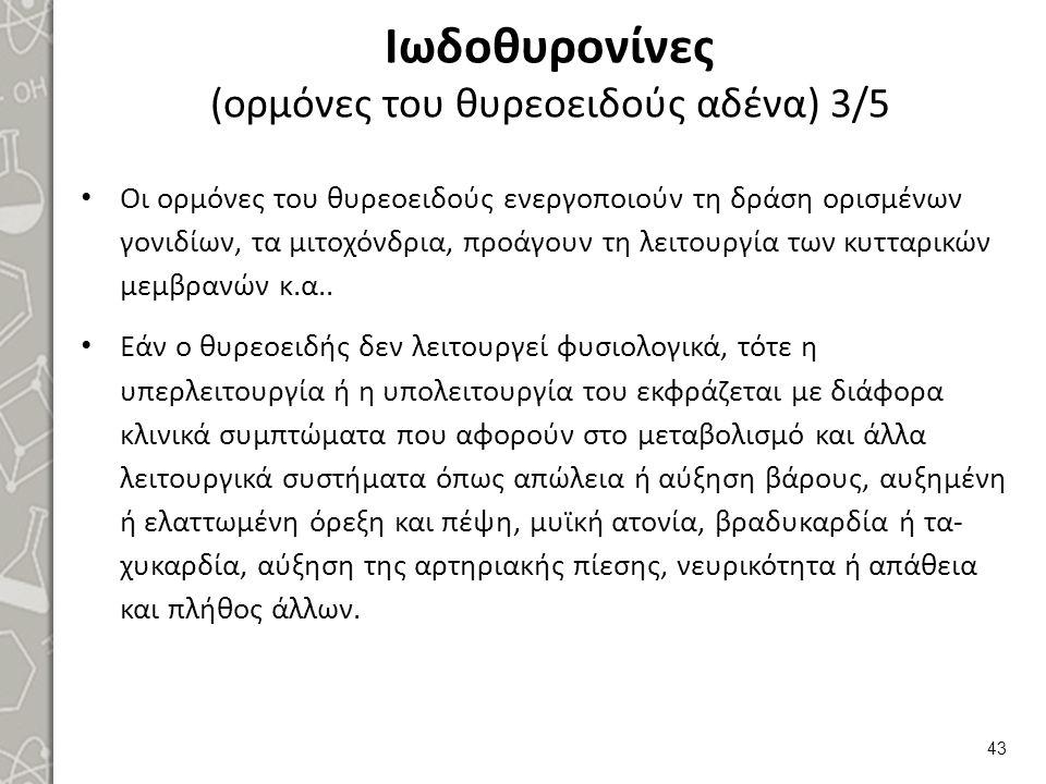 Ιωδοθυρονίνες (ορμόνες του θυρεοειδούς αδένα) 3/5 Οι ορμόνες του θυρεοειδούς ενεργοποιούν τη δράση ορισμένων γονιδίων, τα μιτοχόνδρια, προάγουν τη λει