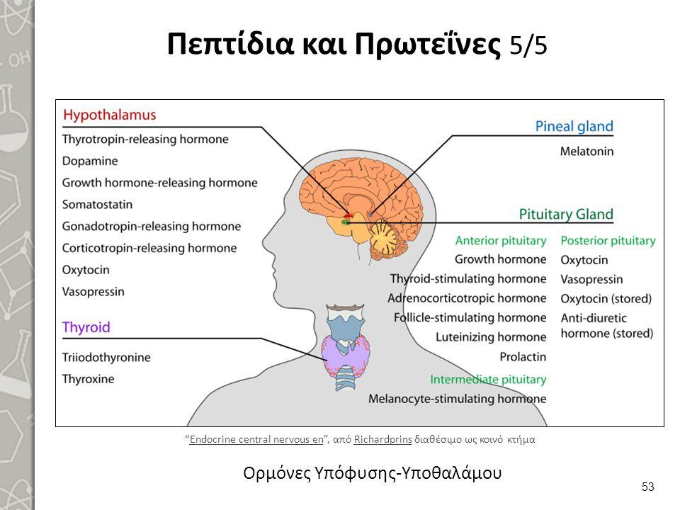 """Πεπτίδια και Πρωτεΐνες 5/5 53 Ορμόνες Υπόφυσης-Υποθαλάμου """"Endocrine central nervous en"""", από Richardprins διαθέσιμο ως κοινό κτήμαEndocrine central n"""
