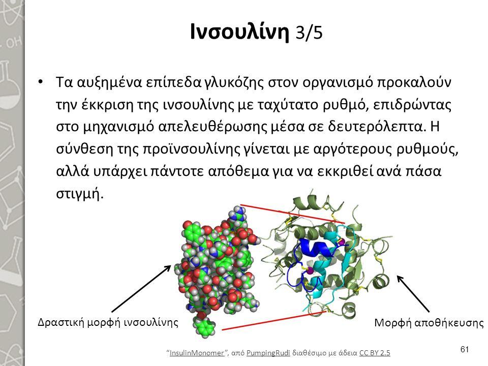 Ινσουλίνη 3/5 Τα αυξημένα επίπεδα γλυκόζης στον οργανισμό προκαλούν την έκκριση της ινσουλίνης με ταχύτατο ρυθμό, επιδρώντας στο μηχανισμό απελευθέρωσ