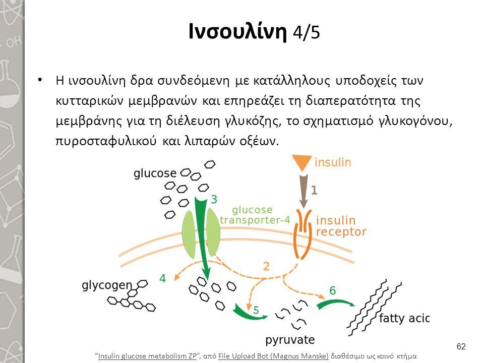 Ινσουλίνη 4/5 Η ινσουλίνη δρα συνδεόμενη με κατάλληλους υποδοχείς των κυτταρικών μεμβρανών και επηρεάζει τη διαπερατότητα της μεμβράνης για τη διέλευσ