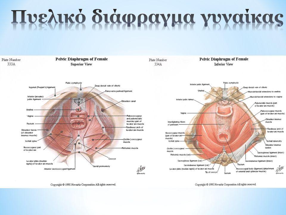 * Χαλάρωση των πυελικών μυών  Πρόπτωση οργάνων  Ακράτεια ούρων  Ακράτεια κοπράνων * Ρήξη πυελικού εδάφους  Ανάπτυξη ουλώδους ιστού Υπερτονικότητα πυελικών μυών (τάση ή ανελαστικότητα)  Αρνητική επιρροή στη σεξουαλική ζωή  Αποβολή