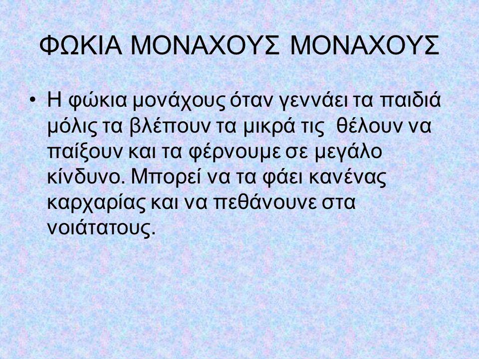 ΦΩΚΙΑ ΜΟΝΑΧΟΥΣ ΜΟΝΑΧΟΥΣ