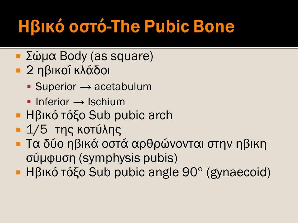  Σώμα Body (as square)  2 ηβικοί κλάδοι  Superior → acetabulum  Inferior → Ischium  Ηβικό τόξο Sub pubic arch  1/5 της κοτύλης  Τα δύο ηβικά οσ