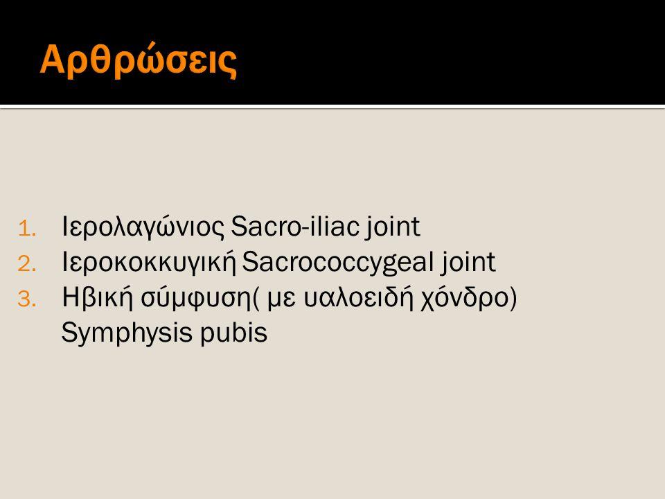 1. Ιερολαγώνιος Sacro-iliac joint 2. Ιεροκοκκυγική Sacrococcygeal joint 3. Ηβική σύμφυση( με υαλοειδή χόνδρο) Symphysis pubis