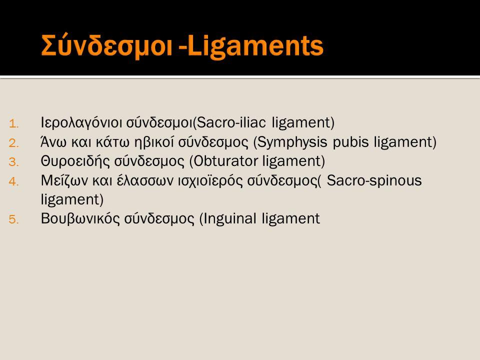 1. Ιερολαγόνιοι σύνδεσμοι(Sacro-iliac ligament) 2. Άνω και κάτω ηβικοί σύνδεσμος (Symphysis pubis ligament) 3. Θυροειδής σύνδεσμος (Obturator ligament