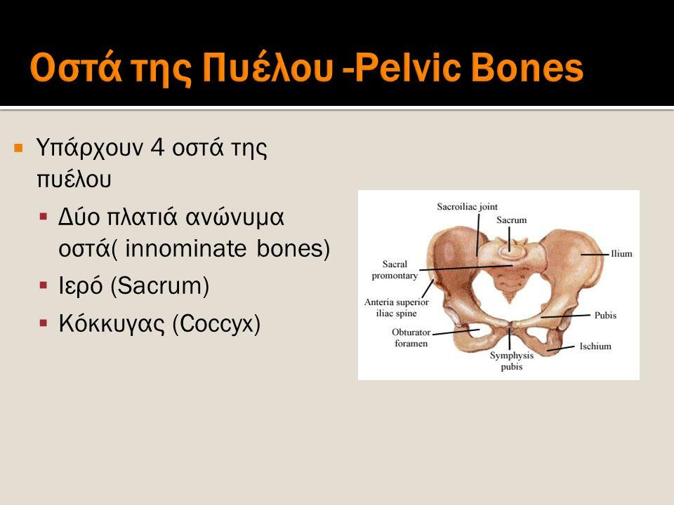  Υπάρχουν 4 οστά της πυέλου  Δύο πλατιά ανώνυμα οστά( innominate bones)  Ιερό (Sacrum)  Κόκκυγας (Coccyx)