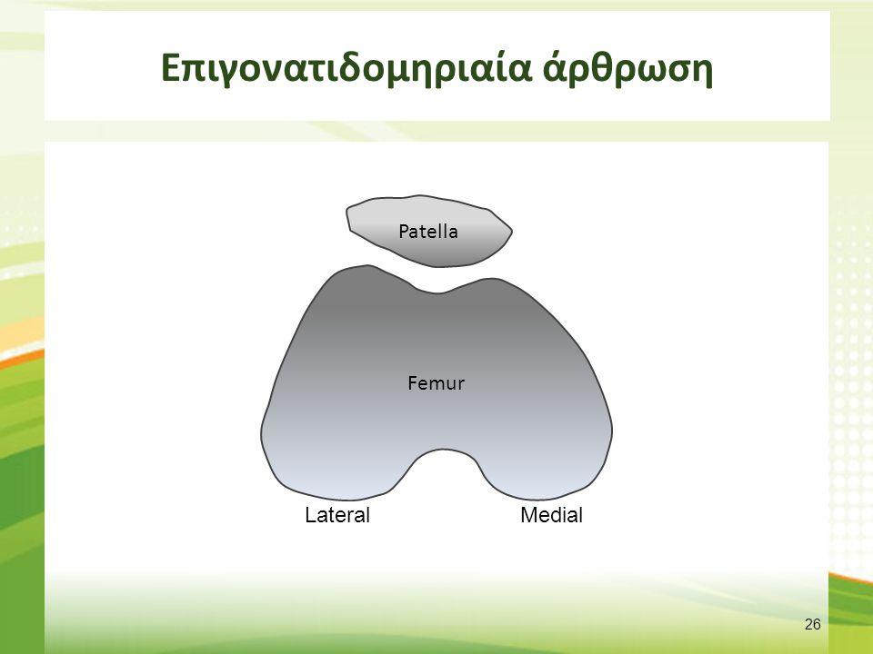 Επιγονατιδομηριαία άρθρωση 26 Patella Femur LateralMedial