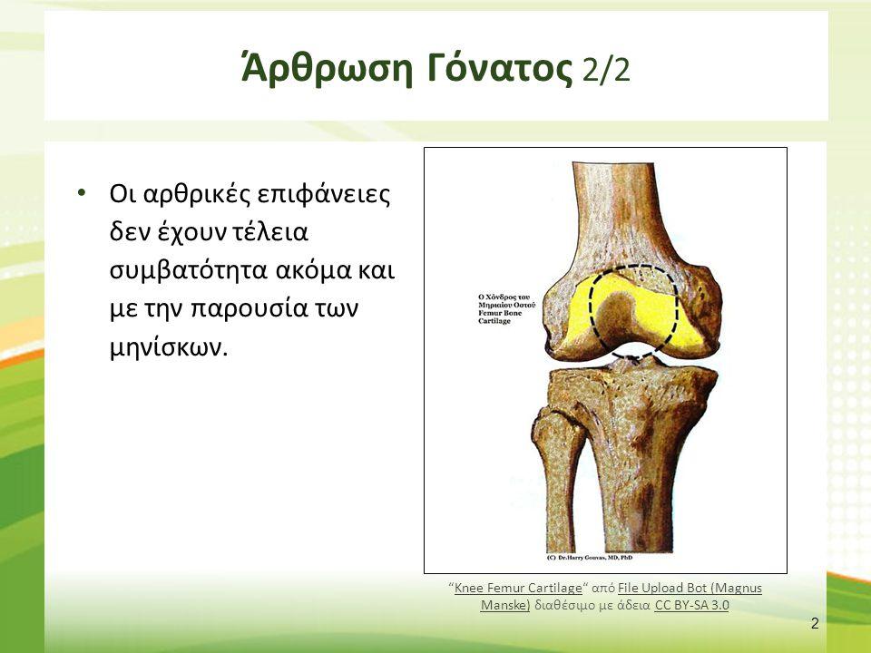"""Άρθρωση Γόνατος 2/2 Οι αρθρικές επιφάνειες δεν έχουν τέλεια συμβατότητα ακόμα και με την παρουσία των μηνίσκων. 2 """"Knee Femur Cartilage"""" από File Uplo"""