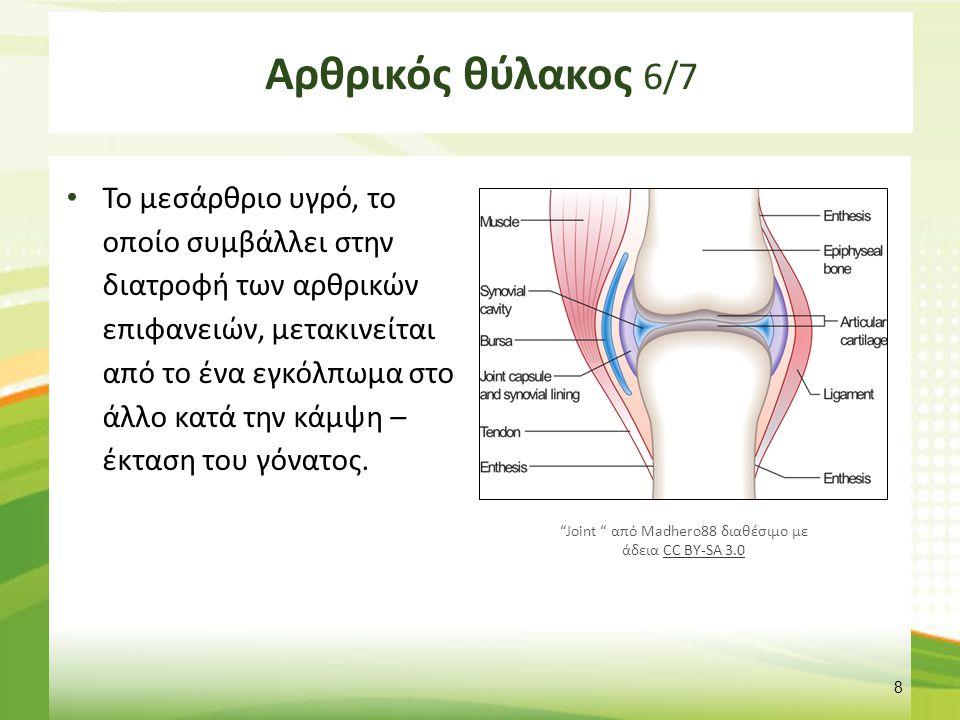 Αρθρικός θύλακος 6/7 Το μεσάρθριο υγρό, το οποίο συμβάλλει στην διατροφή των αρθρικών επιφανειών, μετακινείται από το ένα εγκόλπωμα στο άλλο κατά την