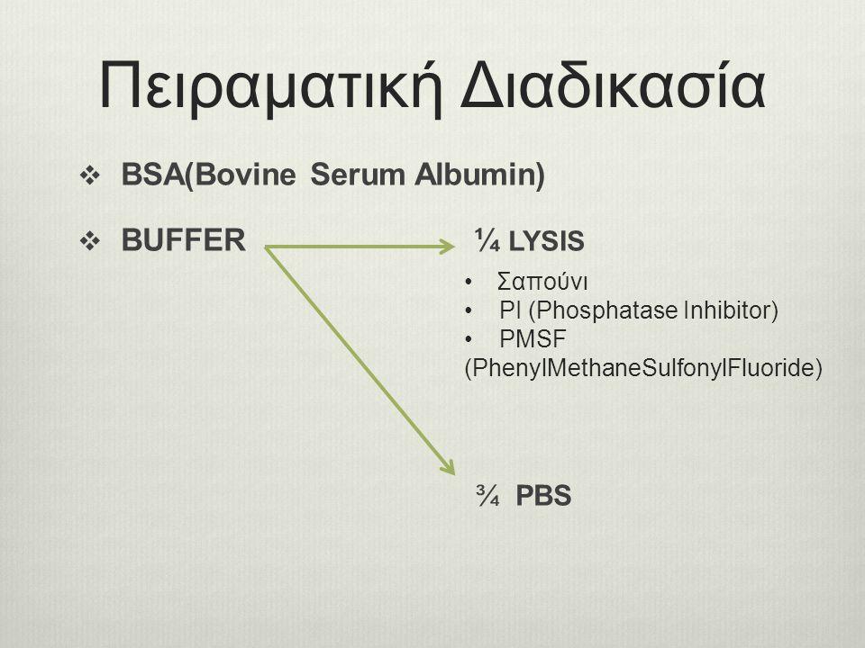 Πειραματική Διαδικασία  BSA(Bovine Serum Αlbumin)  BUFFER ¼ LYSIS ¾ PBS Σαπούνι PI (Phosphatase Inhibitor) PMSF (PhenylMethaneSulfonylFluoride)