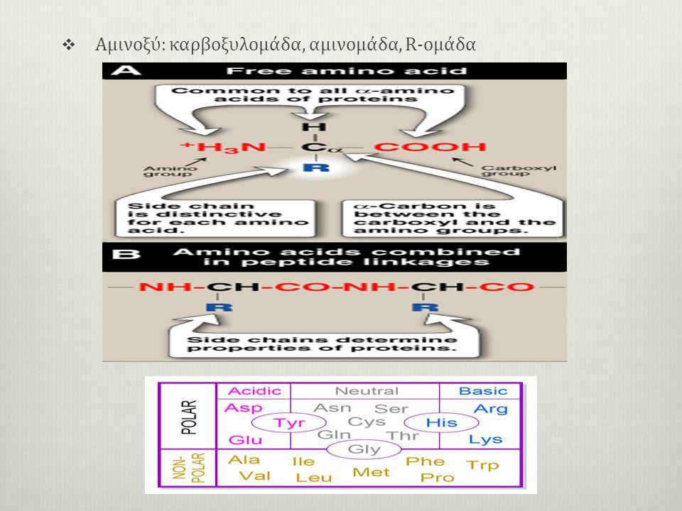  Αμινοξύ: καρβοξυλομάδα, αμινομάδα, R-oμάδα
