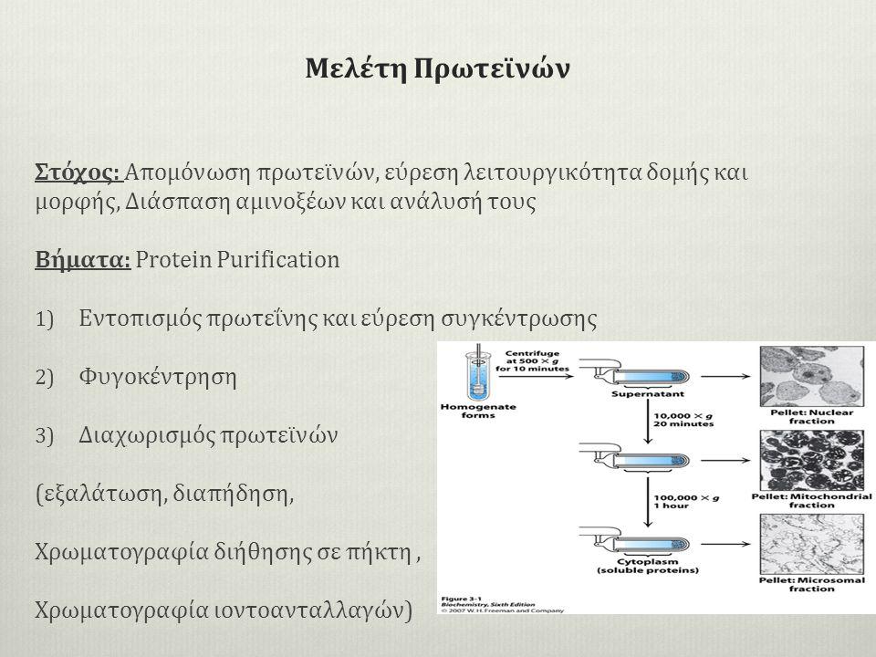 Μελέτη Πρωτεϊνών Στόχος: Απομόνωση πρωτεϊνών, εύρεση λειτουργικότητα δομής και μορφής, Διάσπαση αμινοξέων και ανάλυσή τους Βήματα: Protein Purification 1) Eντοπισμός πρωτεΐνης και εύρεση συγκέντρωσης 2) Φυγοκέντρηση 3) Διαχωρισμός πρωτεϊνών (εξαλάτωση, διαπήδηση, Χρωματογραφία διήθησης σε πήκτη, Χρωματογραφία ιοντοανταλλαγών)