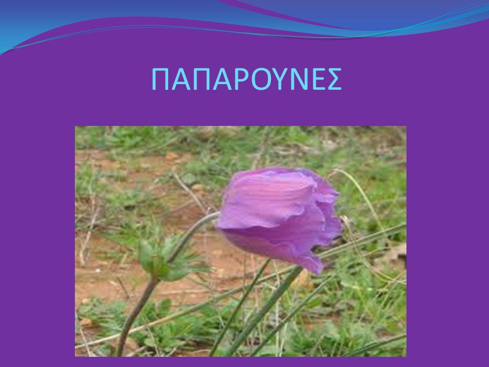 ΠΑΠΑΡΟΥΝΕΣ