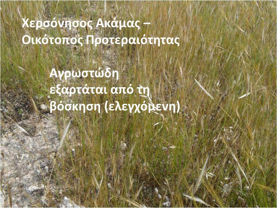 Χερσόνησος Ακάμας – Οικότοπος Προτεραιότητας Αγρωστώδη εξαρτάται από τη βόσκηση (ελεγχόμενη)