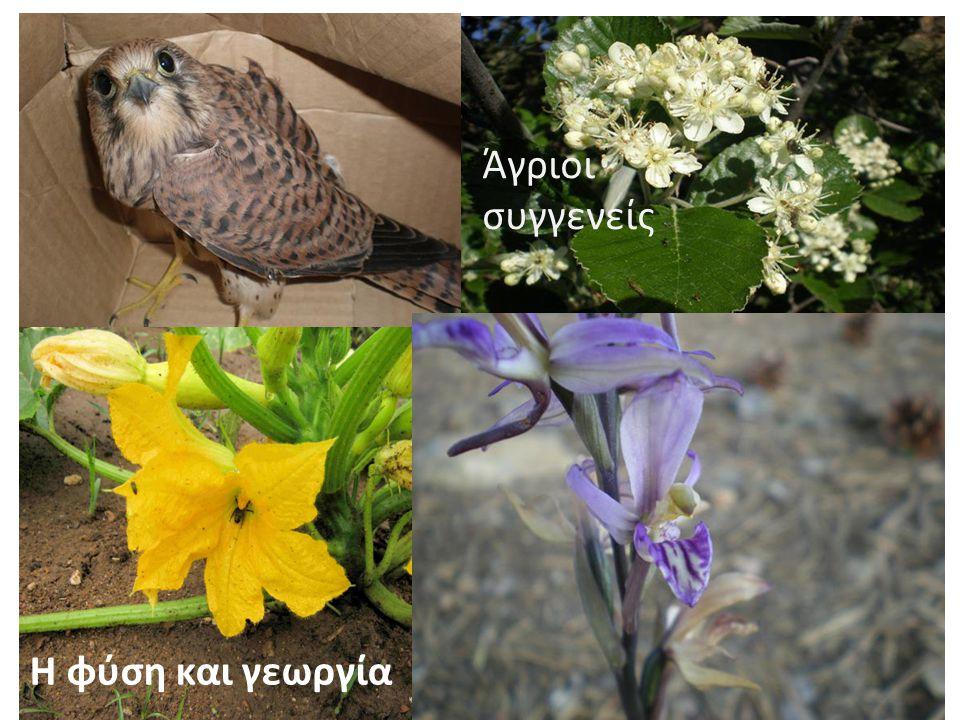 Η φύση και γεωργία Άγριοι συγγενείς