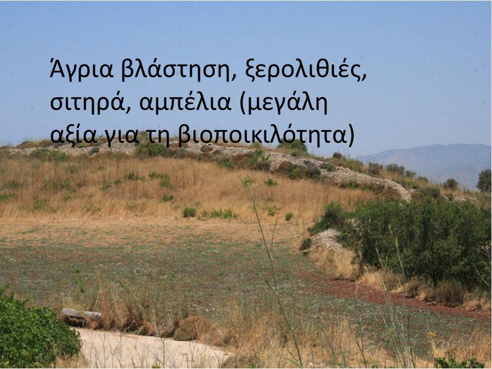 Άγρια βλάστηση, ξερολιθιές, σιτηρά, αμπέλια (μεγάλη αξία για τη βιοποικιλότητα)