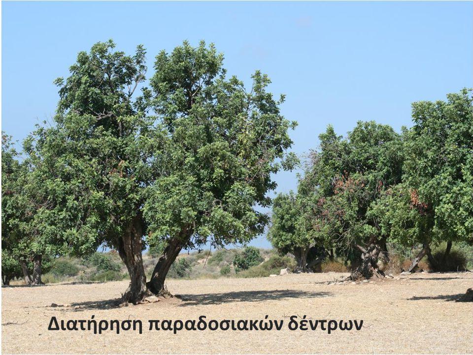 Διατήρηση παραδοσιακών δέντρων