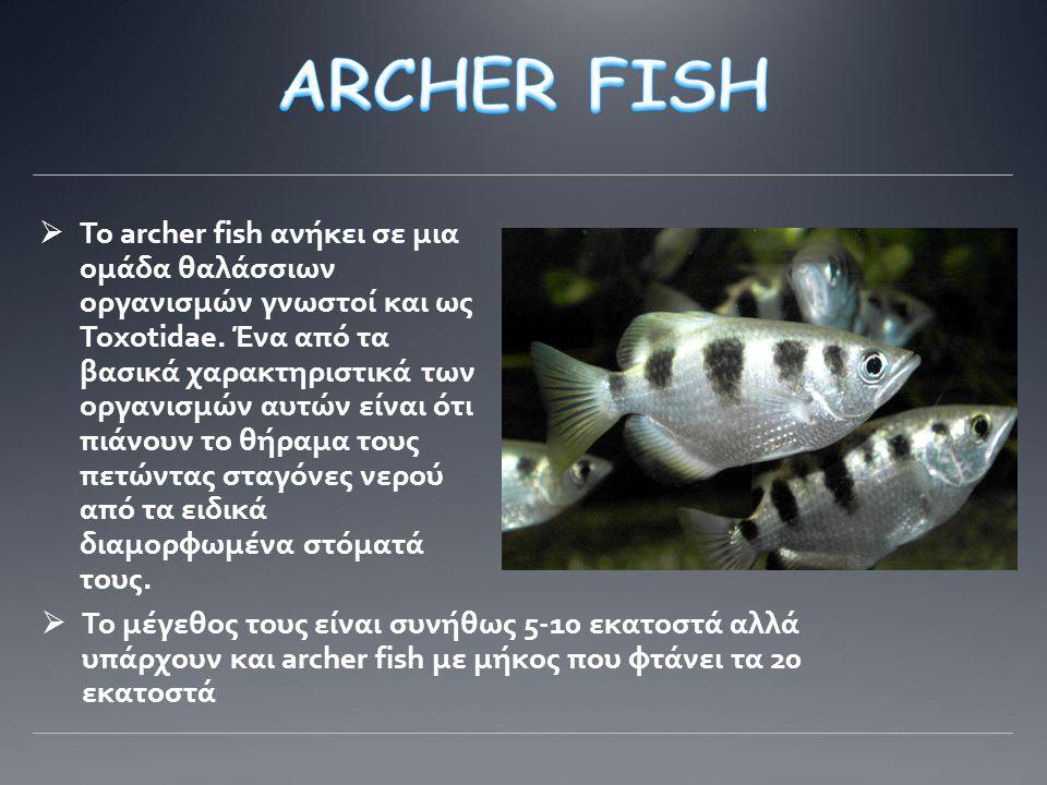 Το Archer Fish τρέφεται κυρίως με έντομα (όπως αράχνες, πεταλούδες, κτλ.) τα οποία συνήθως συχνάζουν σε κοντινά κλαδιά πάνω από μια λίμνη.