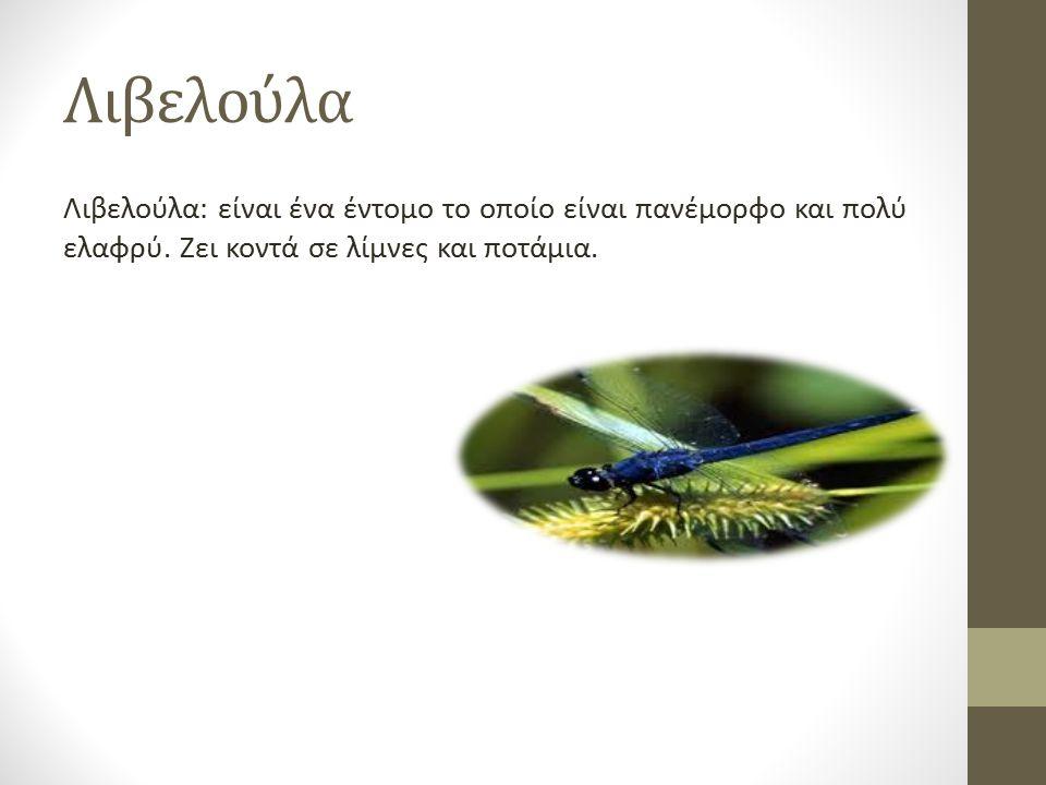 Λιβελούλα Λιβελούλα: είναι ένα έντομο το οποίο είναι πανέμορφο και πολύ ελαφρύ. Ζει κοντά σε λίμνες και ποτάμια.