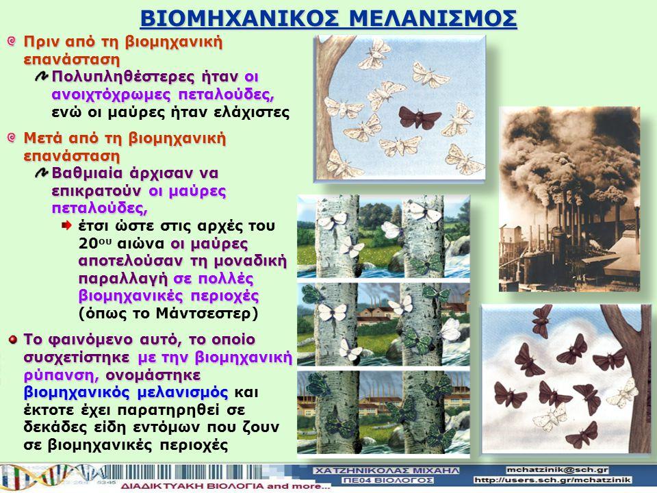 Ένα πολύ γνωστό παράδειγμα δράσης της φυσικής επιλογής είναι αυτό της πεταλούδας Biston betularia, ενός εντόμου που είναι πολύ διαδεδομένο στην Αγγλία