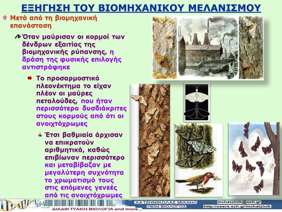 Η εξήγηση του φαινομένου βρίσκεται στη δράση της Φυσικής Επιλογής Πριν από τη βιομηχανική επανάσταση οι κορμοί των δένδρων είχαν το φυσικό ανοιχτό χρώ