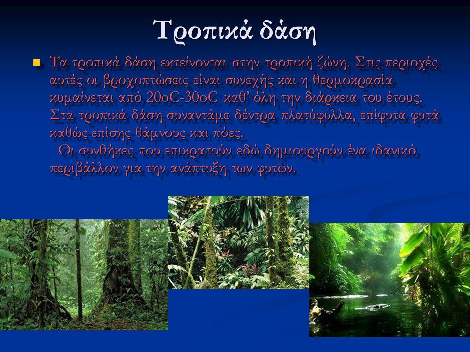 Τροπικά δάση Τα τροπικά δάση εκτείνονται στην τροπική ζώνη. Στις περιοχές αυτές οι βροχοπτώσεις είναι συνεχής και η θερμοκρασία κυμαίνεται από 20oC-30