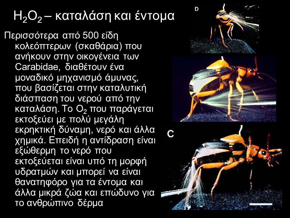 H 2 Ο 2 – καταλάση και έντομα Περισσότερα από 500 είδη κολεόπτερων (σκαθάρια) που ανήκουν στην οικογένεια των Carabidae, διαθέτουν ένα μοναδικό μηχανισμό άμυνας, που βασίζεται στην καταλυτική διάσπαση του νερού από την καταλάση.