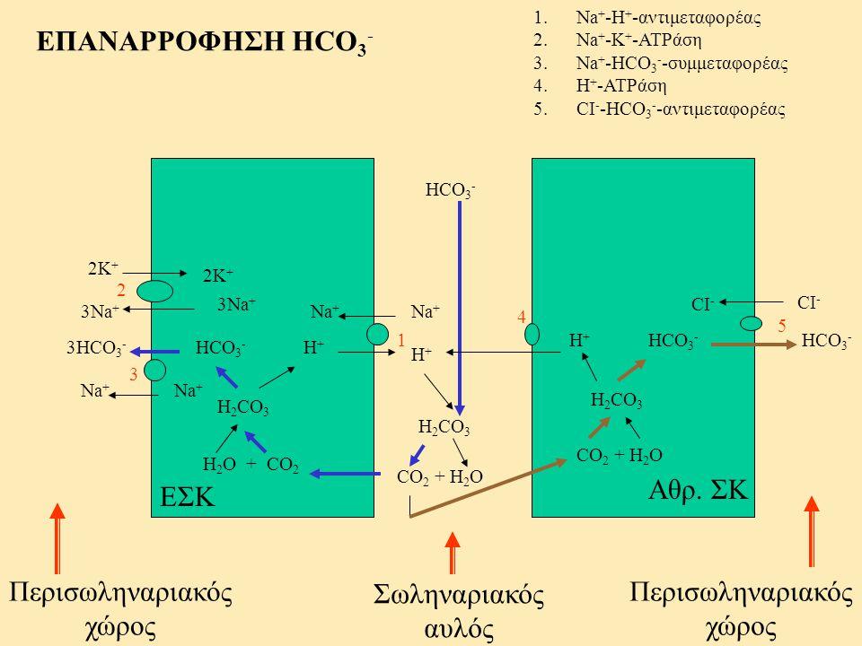 H 2 O + CO 2 H 2 CO 3 HCO 3 - H+H+ ΕΣΚ Σωληναριακός αυλός Αθρ. ΣΚ Περισωληναριακός χώρος Περισωληναριακός χώρος H+H+ Na + 1 1.Na + -H + -αντιμεταφορέα