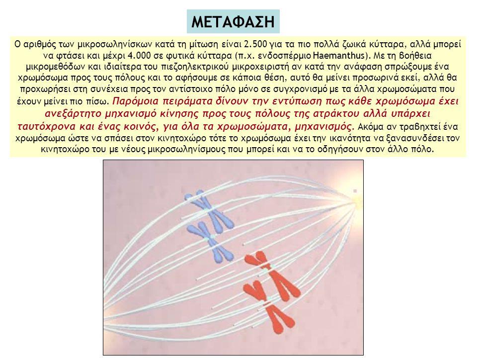 Ο αριθμός των μικροσωληνίσκων κατά τη μίτωση είναι 2.500 για τα πιο πολλά ζωικά κύτταρα, αλλά μπορεί να φτάσει και μέχρι 4.000 σε φυτικά κύτταρα (π.χ.