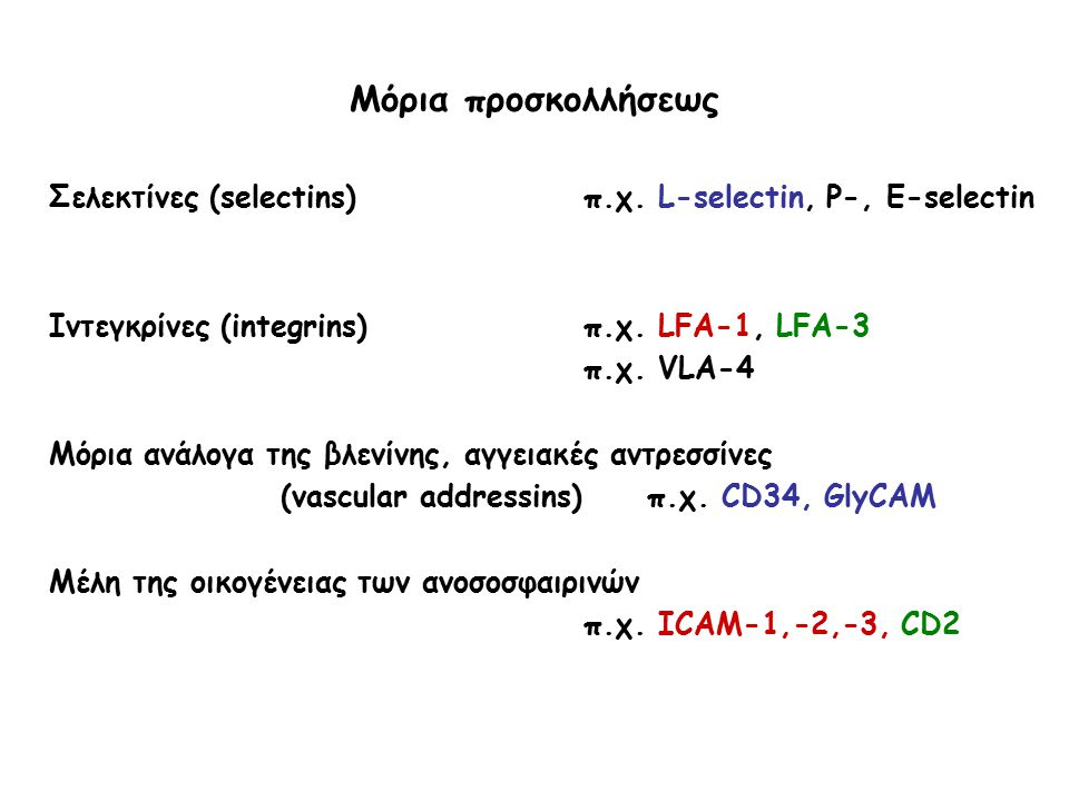 Μόρια προσκολλήσεως Σελεκτίνες (selectins)π.χ. L-selectin, P-, Ε-selectin Ιντεγκρίνες (integrins)π.χ. LFA-1, LFA-3 π.χ. VLA-4 Μόρια ανάλογα της βλενίν