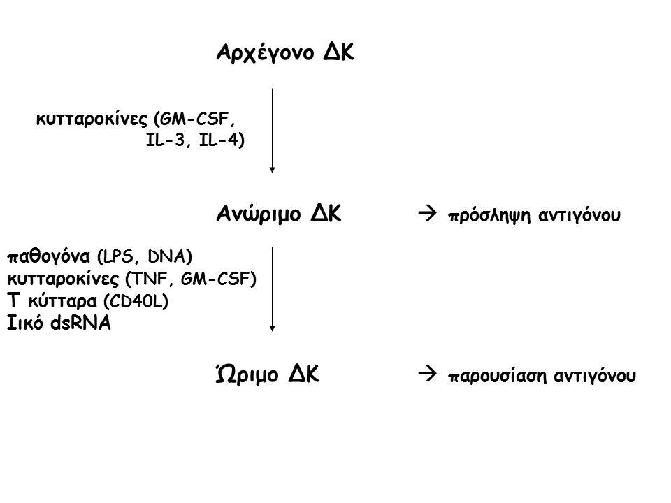 Αρχέγονο ΔΚ Ανώριμο ΔΚ  πρόσληψη αντιγόνου Ώριμο ΔΚ  παρουσίαση αντιγόνου παθογόνα (LPS, DNA) κυτταροκίνες (TNF, GM-CSF) T κύτταρα (CD40L) Ιικό dsRN