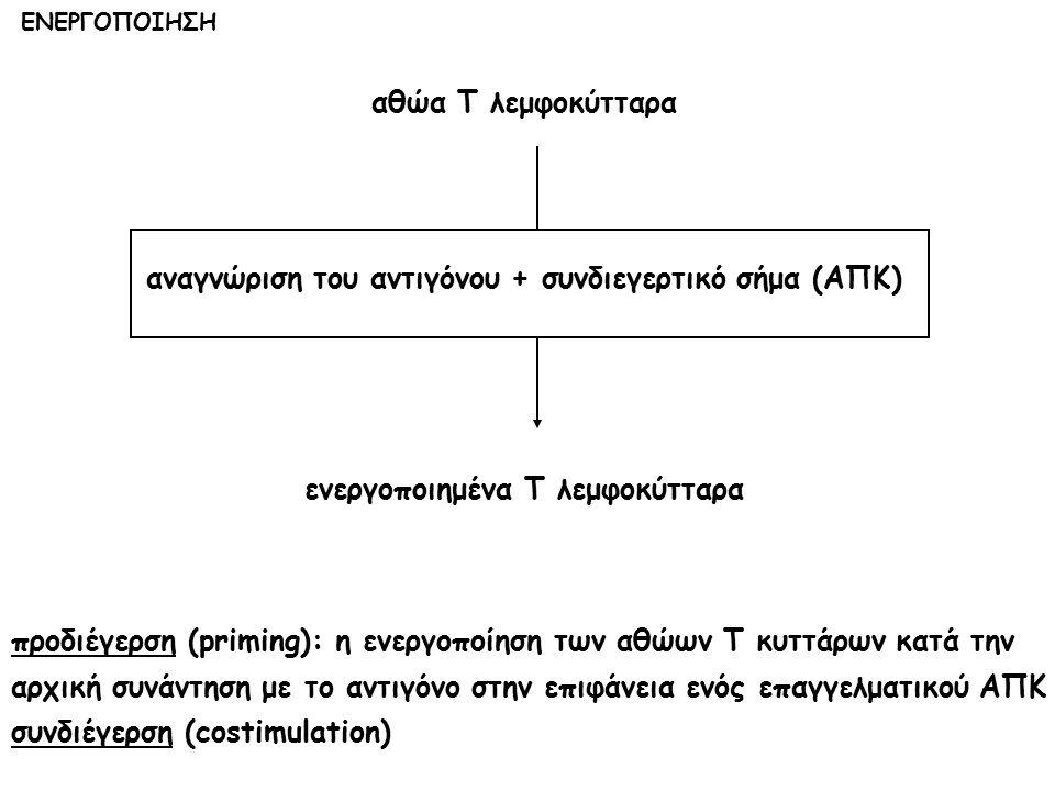 αθώα Τ λεμφοκύτταρα αναγνώριση του αντιγόνου + συνδιεγερτικό σήμα (ΑΠΚ) ενεργοποιημένα Τ λεμφοκύτταρα προδιέγερση (priming): η ενεργοποίηση των αθώων