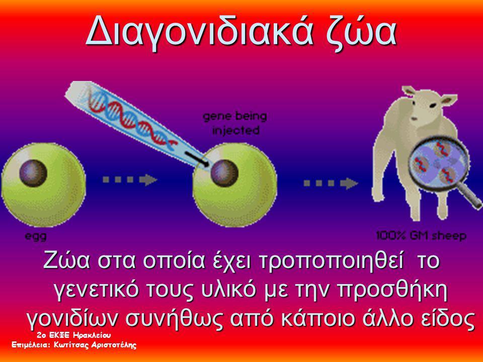 Διαγονιδιακά ζώα Ζώα στα οποία έχει τροποποιηθεί το γενετικό τους υλικό με την προσθήκη γονιδίων συνήθως από κάποιο άλλο είδος 2ο ΕΚΦΕ Ηρακλείου Επιμέ