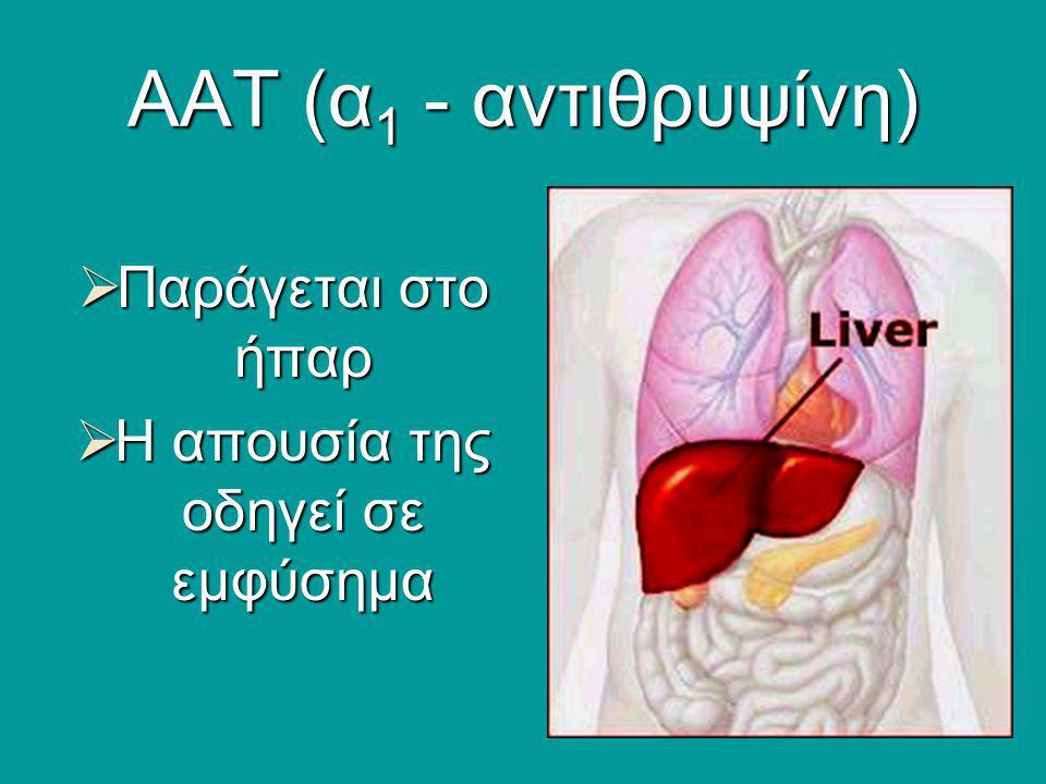 ΑΑΤ (α 1 - αντιθρυψίνη)  Παράγεται στο ήπαρ  Η απουσία της οδηγεί σε εμφύσημα