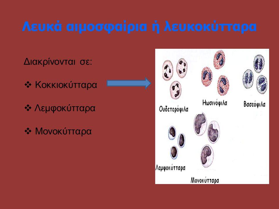 Λευκά αιμοσφαίρια ή λευκοκύτταρα Διακρίνονται σε:  Κοκκιοκύτταρα  Λεμφοκύτταρα  Μονοκύτταρα