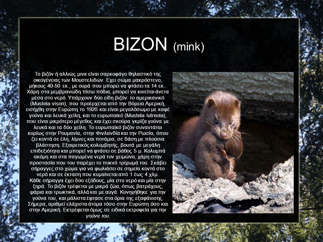 ΒΙΖΟΝ (mink) Το βιζόν ή αλλιώς μινκ είναι σαρκοφάγο θηλαστικό της οικογένειας των Μουστελιδών. Εχει σώμα μακρόστενο, μήκους 40-50 εκ., με ουρά που μπο