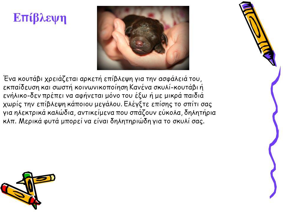 Ε π ίβλεψη Ένα κουτάβι χρειάζεται αρκετή επίβλεψη για την ασφάλειά του, εκπαίδευση και σωστή κοινωνικοποίηση Κανένα σκυλί-κουτάβι ή ενήλικο-δεν πρέπει να αφήνεται μόνο του έξω ή με μικρά παιδιά χωρίς την επίβλεψη κάποιου μεγάλου.