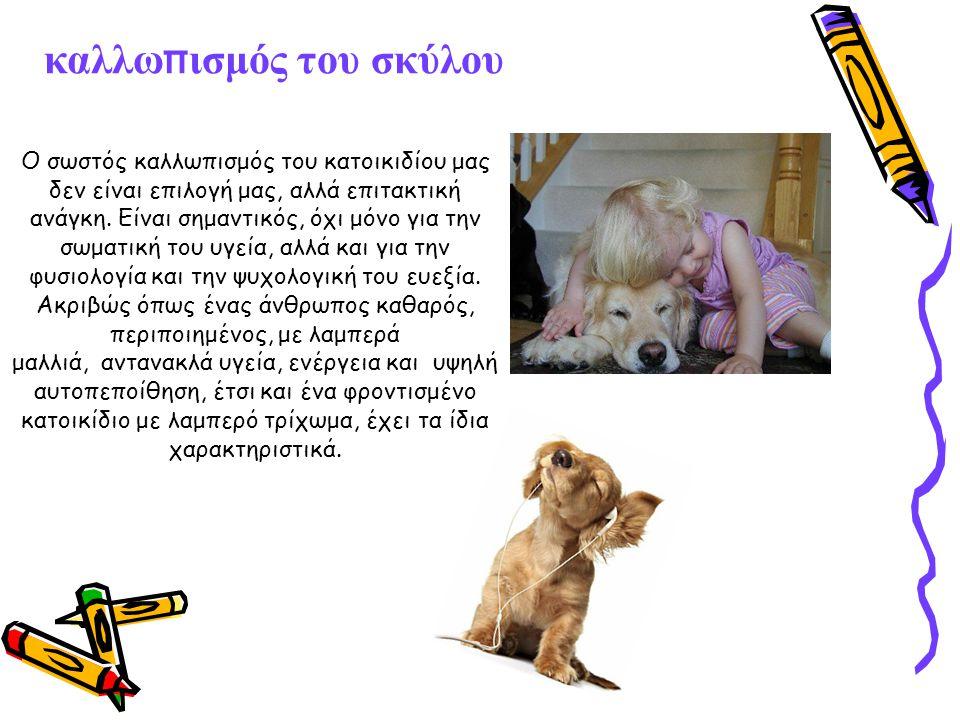 καλλω π ισμός του σκύλου Ο σωστός καλλωπισμός του κατοικιδίου μας δεν είναι επιλογή μας, αλλά επιτακτική ανάγκη.