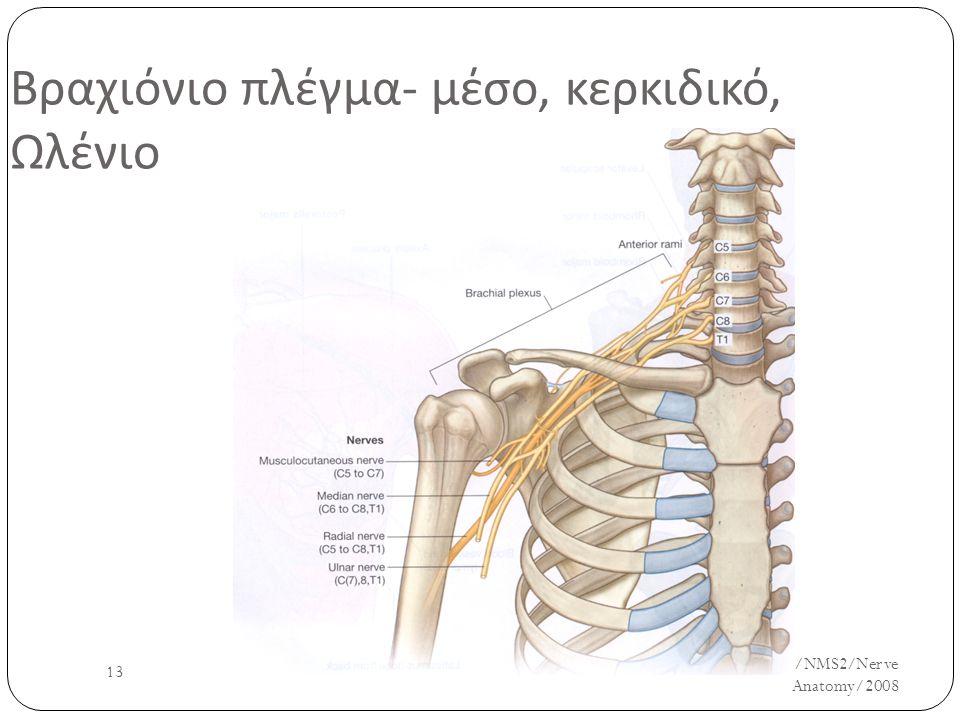 UH/AM/SCR/NMS2/Nerve Anatomy/2008 13 Βραχιόνιο πλέγμα - μέσο, κερκιδικό, Ωλένιο