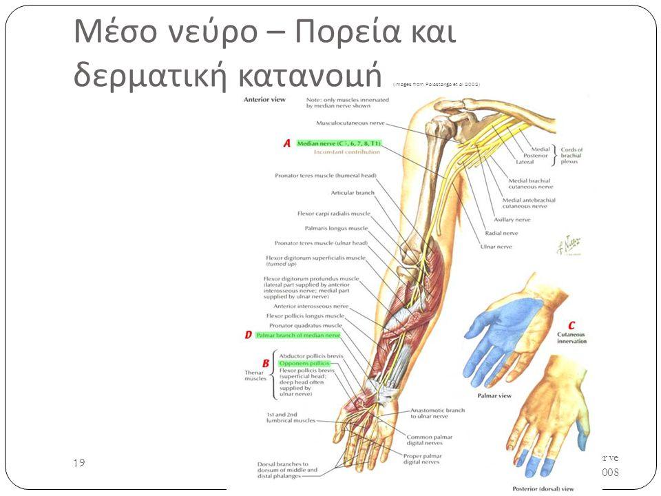 Μέσο νεύρο – Πορεία και δερματική κατανομή (images from Palastanga et al 2002) UH/AM/SCR/NMS2/Nerve Anatomy/2008 19