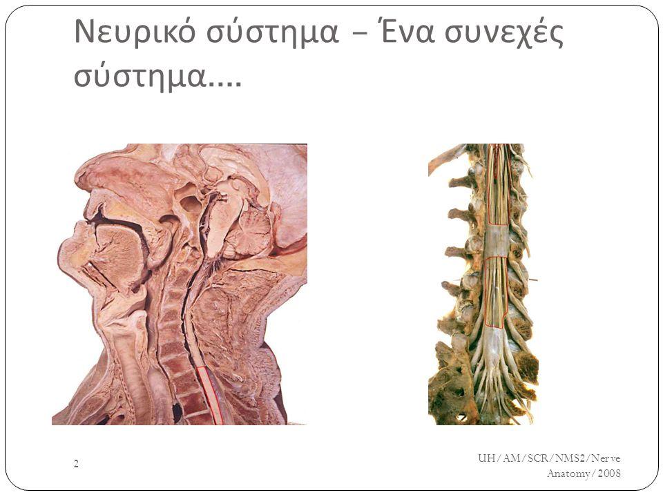 UH/AM/SCR/NMS2/Nerve Anatomy/2008 2 Νευρικό σύστημα – Ένα συνεχές σύστημα ….